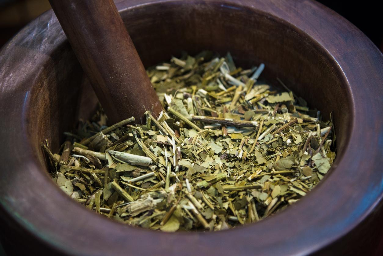 O uso da erva-mate na indústria de alimentos