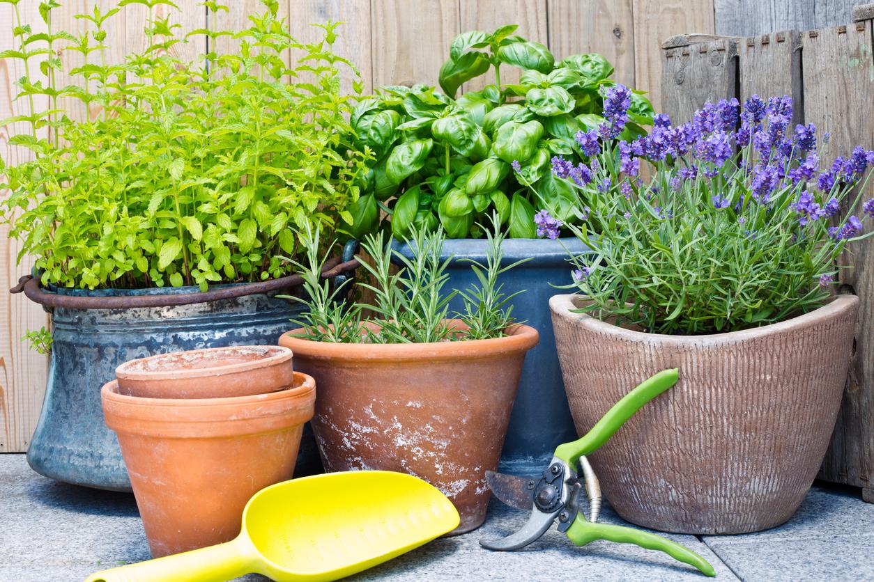 Conheça 4 chás para cultivar em casa