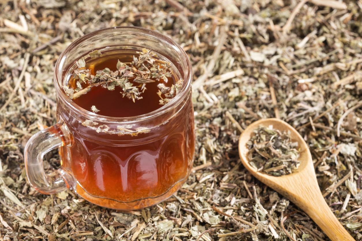 Chá de Quebra Pedra: conheça os diversos benefícios dessa erva