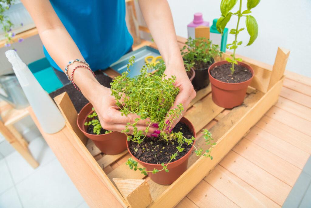 Benefícios de ter uma horta em casa